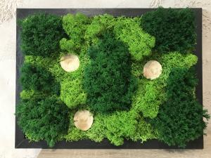 Якими перевагами володіють картини з стабілізованого моху