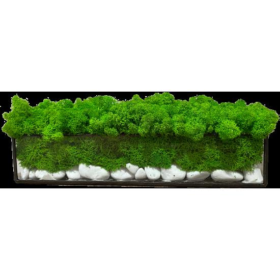 Флораріум А1. 30х7х7 см